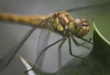 Macro - libelle