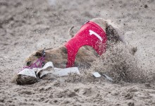 Hondenrennen
