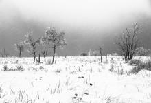 Sneuwlandschap