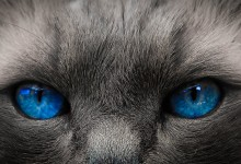 Twee maal blauw